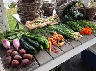 Harvest Basket from Sundew Gardens