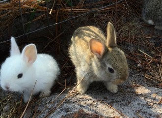Baby rabbits emerge at Sundew Gardens